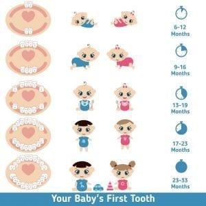 Crescita dei dentini da latte